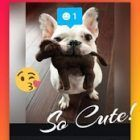 Square Quick crear collages y fotos para instagram